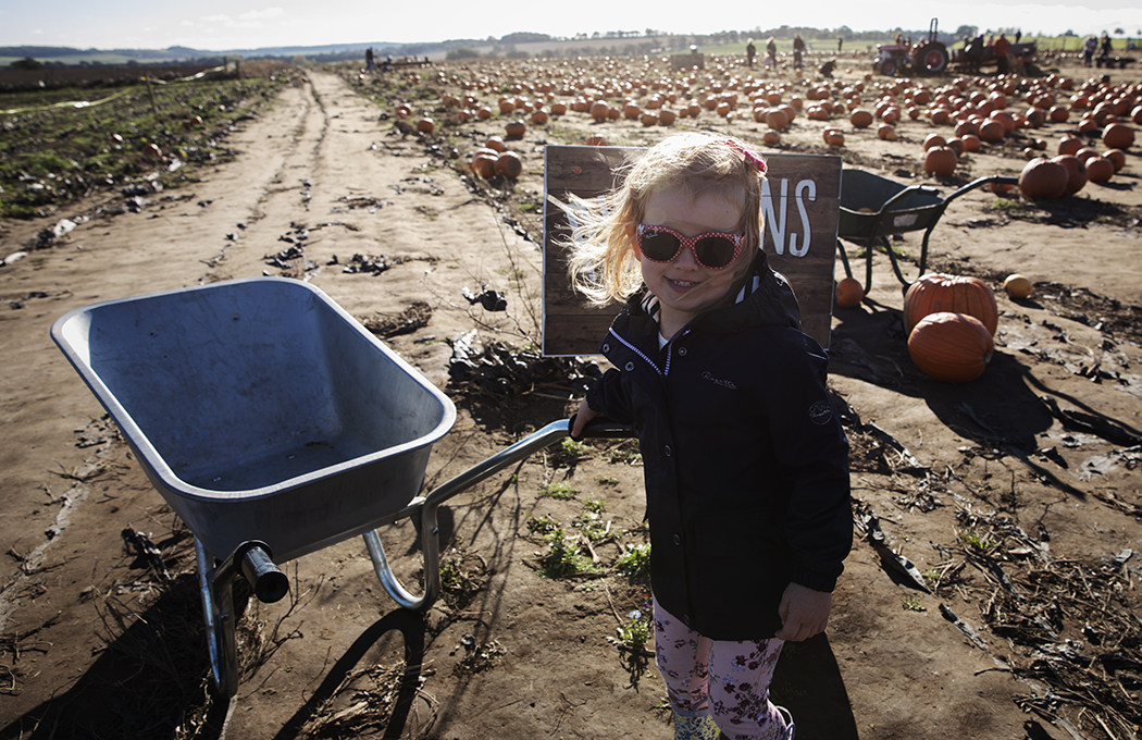 Pumpkin picking with a toddler