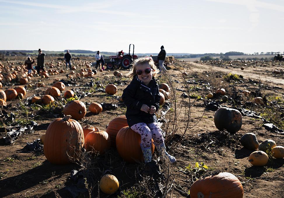 Toddler sitting on pumpkin at Farmer Copleys