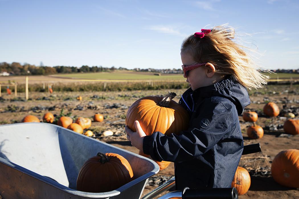 Candid pumpkin picking photo