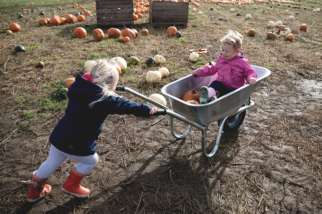 Farmer Copleys Pumpkin Patch